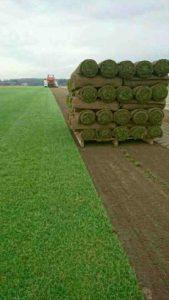 färdig gräsmatta pris göteborg